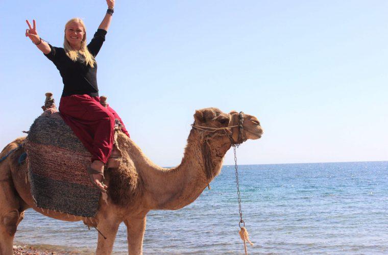 kamele dahab